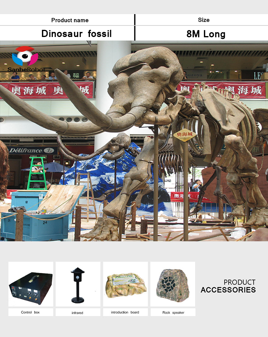 恐龙骨架8米