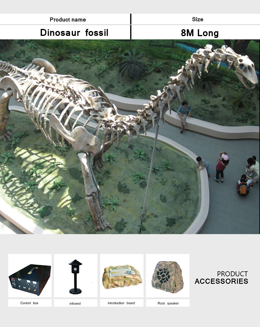 恐龙化石8米